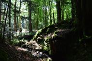 Un diagnostic biodiversité sur les forêts d'Écouves et de Bourse