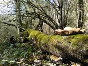 Le bois mort, une ressource vitale