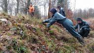 Intervention en forêt des Andaines pour préserver le Lycopode en massue