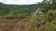 COPIL du site Natura 2000 Landes du Tertre Bizet et Fosse Arthour